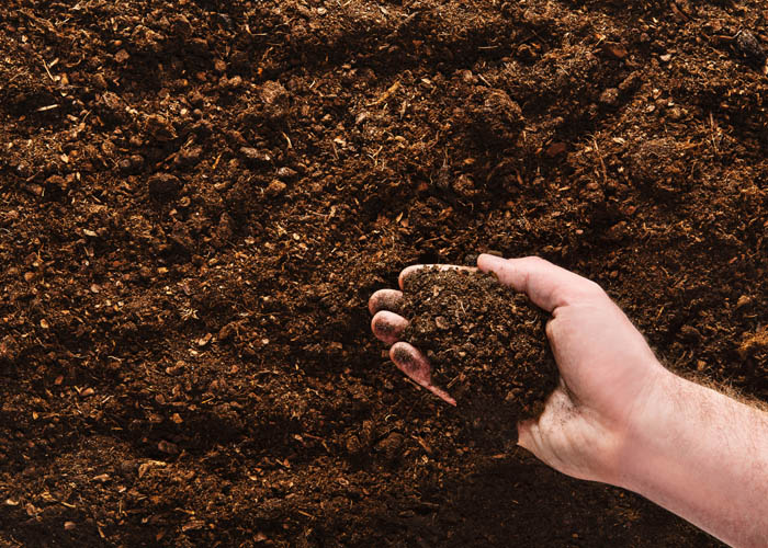 Hand planting seeds on a natural soil background. Closeup image.